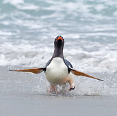 BRD 05 KH0164 01