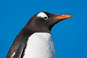BRD 05 KH0173 01