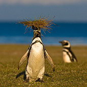 BRD 05 KH0181 01