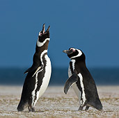 BRD 05 KH0182 01