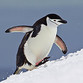 BRD 05 KH0183 01