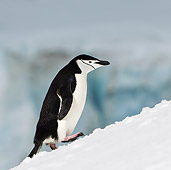 BRD 05 KH0186 01