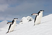 BRD 05 KH0188 01