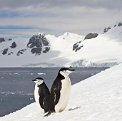BRD 05 KH0193 01