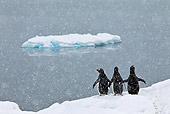 BRD 05 KH0195 01