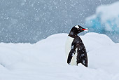 BRD 05 KH0196 01