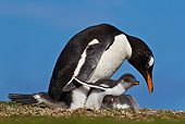 BRD 05 KH0212 01
