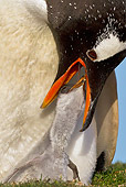 BRD 05 KH0215 01