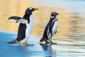 BRD 05 KH0217 01