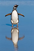 BRD 05 KH0219 01