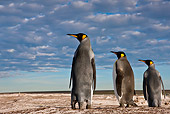 BRD 05 KH0228 01