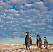 BRD 05 KH0229 01