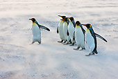 BRD 05 KH0230 01