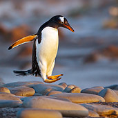 BRD 05 KH0233 01