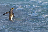 BRD 05 KH0235 01