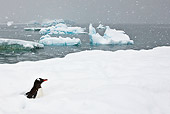 BRD 05 KH0242 01