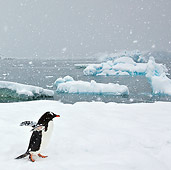 BRD 05 KH0243 01