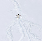 BRD 05 KH0244 01
