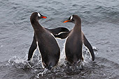 BRD 05 KH0245 01