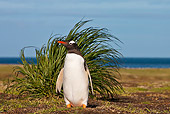 BRD 05 KH0247 01