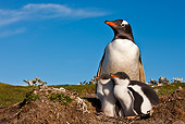BRD 05 KH0252 01