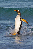 BRD 05 KH0255 01