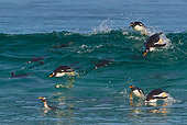 BRD 05 KH0257 01
