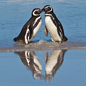 BRD 05 KH0265 01