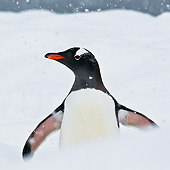 BRD 05 KH0269 01