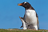 BRD 05 KH0272 01