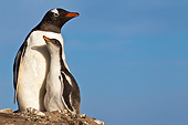 BRD 05 KH0273 01