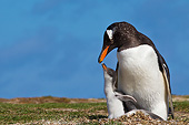 BRD 05 KH0274 01