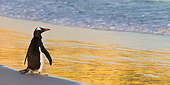 BRD 05 KH0285 01