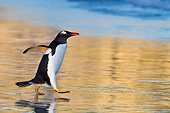 BRD 05 KH0287 01