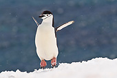 BRD 05 KH0292 01