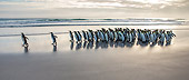 BRD 05 KH0296 01