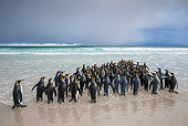 BRD 05 KH0307 01