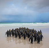 BRD 05 KH0308 01