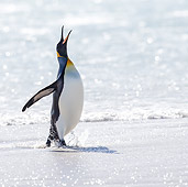 BRD 05 KH0311 01