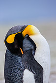 BRD 05 KH0313 01
