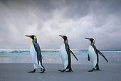 BRD 05 KH0318 01