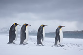 BRD 05 KH0323 01