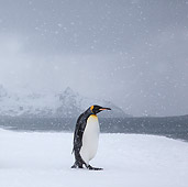 BRD 05 KH0325 01