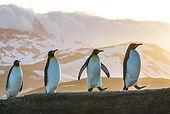 BRD 05 KH0337 01