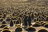 BRD 05 KH0343 01