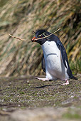 BRD 05 KH0348 01
