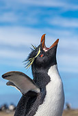 BRD 05 KH0351 01