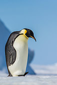 BRD 05 KH0353 01