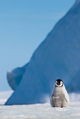 BRD 05 KH0355 01