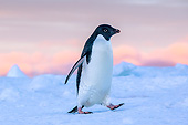 BRD 05 KH0356 01